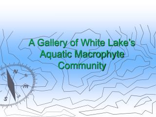 A Gallery of White Lake's Aquatic Macrophyte Community