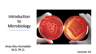 Bacteriology Lecture 3:  Bacterial Growth