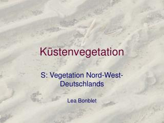 Küstenvegetation