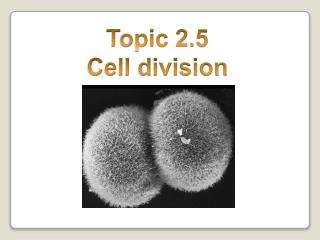 Topic 2.5 Cell division