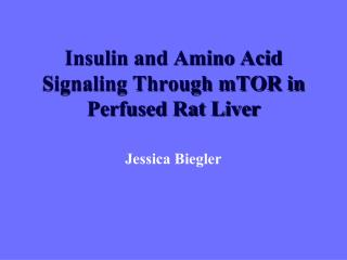 Insulin and Amino Acid Signaling Through mTOR in Perfused Rat Liver