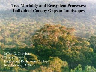 Tree Mortality and Ecosystem Processes: Individual Canopy Gaps to Landscapes
