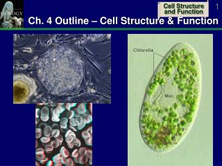 Ch. 4 Outline – Cell Structure & Function