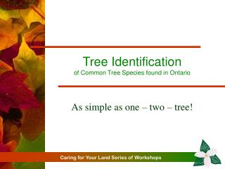 Tree Identification of Common Tree Species found in Ontario