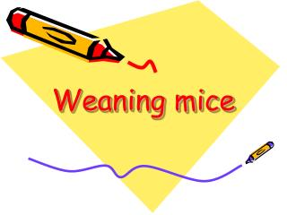 Weaning mice