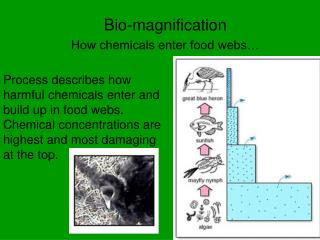 Bio-magnification How chemicals enter food webs…