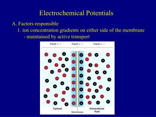 Electrochemical Potentials