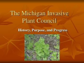 The Michigan Invasive Plant Council