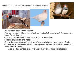 Zebra Finch : The machine behind the mouth (or beak)