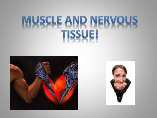 Muscle and nervous Tissue!