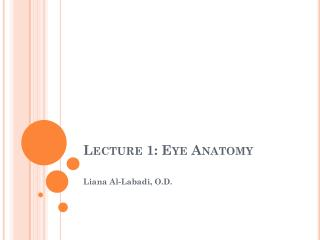 Lecture 1: Eye Anatomy