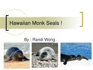 Hawaiian Monk Seals !
