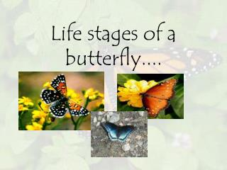 Life stages of a butterfly....