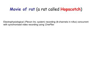 Movie of rat  (a rat called  Hopscotch )
