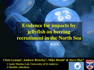 Evidence for impacts by jellyfish on herring recruitment in the North Sea