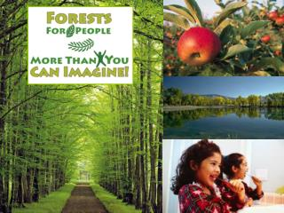 Forests For People More Than You Can Imagine!