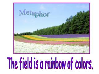 The field is a rainbow of colors.