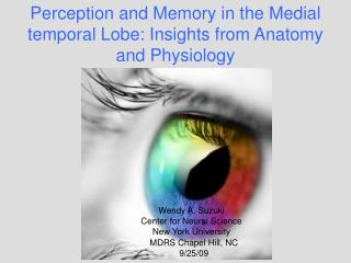 Perception and Memory in the Medial temporal Lobe: Insights from Anatomy and Physiology