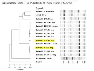 Supplementary Figure 1 : Rep-PCR Results of Twelve Isolates of  S. aureus