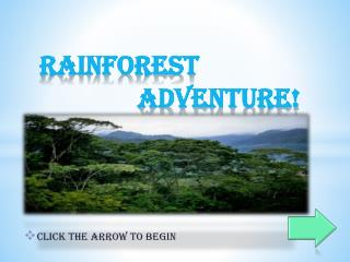 Rainforest 						Adventure!