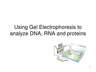 Using Gel Electrophoresis to analyze DNA, RNA and proteins