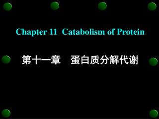 Chapter 11  Catabolism of Protein 第十一章  蛋白质分解代谢