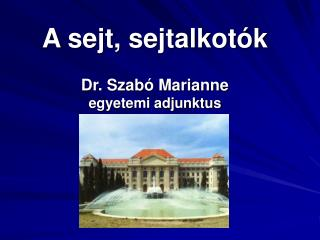 A sejt, sejtalkotók Dr. Szabó Marianne egyetemi adjunktus