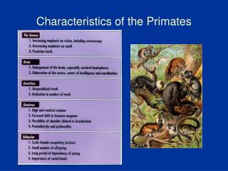 Characteristics of the Primates