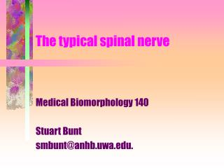 The typical spinal nerve