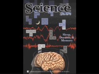 The Physiology and Chemistry of the Brain Change Across the Night