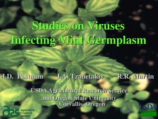 Studies on Viruses  Infecting Mint Germplasm