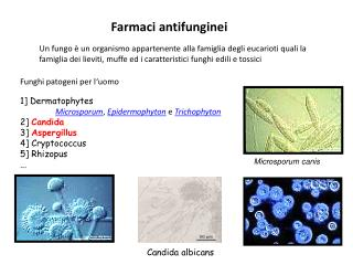 Farmaci antifunginei
