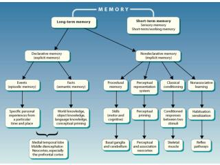 severe anterograde amnesia  temporally graded retrograde amnesia