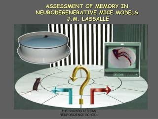 ASSESSMENT OF MEMORY IN NEURODEGENERATIVE MICE MODELS  J.M. LASSALLE