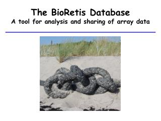 The BioRetis Database A tool for analysis and sharing of array data