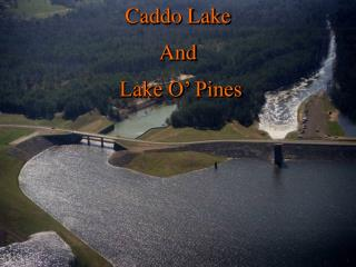 Caddo Lake  And  Lake O' Pines