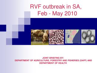 RVF outbreak in SA,   Feb - May 2010