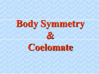 Body Symmetry & Coelomate