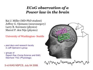 ECoG observation of a  Power law in the brain