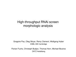 High-throughput RNAi screen  morphologic analysis