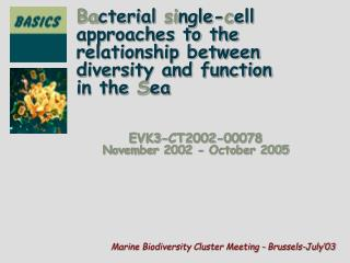 Ba cterial  si ngle- c ell  approaches to the  relationship between  diversity and function
