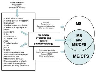 Systemic IO&NS pathways in Inflammation CMI activation