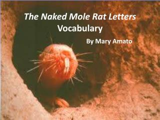 The Naked Mole Rat Letters Vocabulary