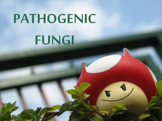 PATHOGENIC FUNGI