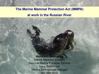 Monica L. DeAngelis Marine Mammal Biologist National Marine Fisheries Service Long Beach, CA