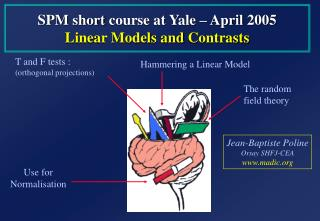 SPM  short  course at Yale –  April  200 5 Linear Models  and  Contrasts