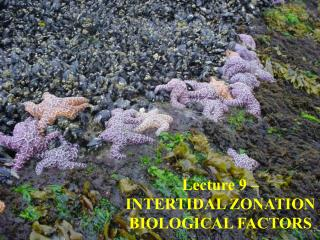 Lecture 9 – INTERTIDAL ZONATION BIOLOGICAL FACTORS