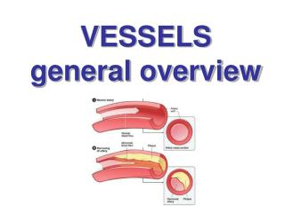 VESSELS general overview