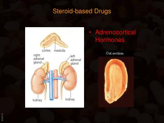 Steroid-based Drugs