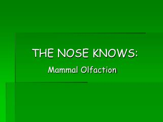 THE NOSE KNOWS: Mammal Olfaction